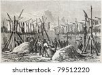 Old Illustration Of Cod Drying...
