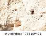 camp verde  arizona.  u.s.a. ... | Shutterstock . vector #795169471