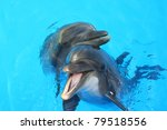 two lovers dolphin swimming in... | Shutterstock . vector #79518556