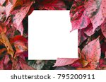 close up creative layout of... | Shutterstock . vector #795200911