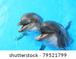 two dolphins swim in the pool | Shutterstock . vector #79521799