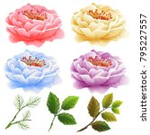 four beautiful flower with... | Shutterstock .eps vector #795227557