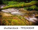 A Natural Bridge Full Of Moss...