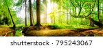 idyllic forest with brook at... | Shutterstock . vector #795243067
