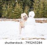 dog destroying  a snowman. ... | Shutterstock . vector #795245284