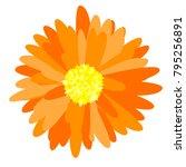 gerbera daisy isolated. vector... | Shutterstock .eps vector #795256891