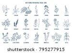 best medicinal herbs for... | Shutterstock .eps vector #795277915