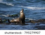wild seals on la jolla cove in... | Shutterstock . vector #795279907