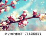 spring border background with... | Shutterstock . vector #795280891