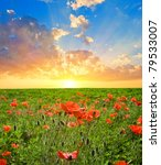 red poppy field at the sunset   Shutterstock . vector #79533007
