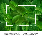 exotic tropical leaf background ... | Shutterstock .eps vector #795363799