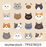 cat faces with various breeds... | Shutterstock .eps vector #795378325
