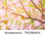 flowers in the sun. pink...   Shutterstock . vector #795380491