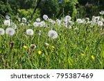 farm object and landscape... | Shutterstock . vector #795387469