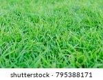 green grass texture  | Shutterstock . vector #795388171