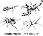 vector drawings sketches... | Shutterstock .eps vector #795408979