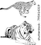 vector drawings sketches... | Shutterstock .eps vector #795414319
