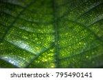 green leaf textures | Shutterstock . vector #795490141