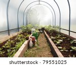Tunnel Shaped Greenhouse  ...