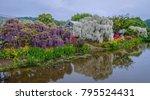 beautiful purple and white...   Shutterstock . vector #795524431