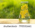 herbal tincture.herbal tincture ... | Shutterstock . vector #795531661