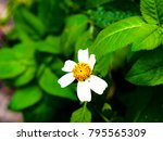 White Flower Iii