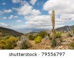 Desert Wildflowers In Full...