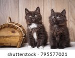 two funny and cute black... | Shutterstock . vector #795577021