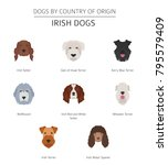 dogs by country of origin.... | Shutterstock .eps vector #795579409