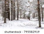 snowy wood forest. winter... | Shutterstock . vector #795582919