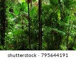 tropical garden  queensland ... | Shutterstock . vector #795644191