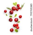 fresh forest berry cranberry... | Shutterstock . vector #795705385