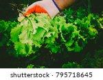 gardening  weeding weeds....   Shutterstock . vector #795718645
