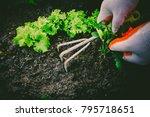 gardening  weeding weeds....   Shutterstock . vector #795718651
