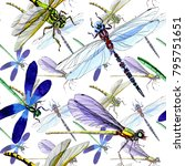 exotic dragonfly wild insect... | Shutterstock . vector #795751651