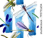 exotic dragonfly wild insect... | Shutterstock . vector #795751654