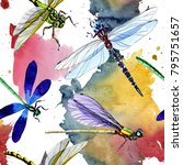exotic dragonfly wild insect... | Shutterstock . vector #795751657