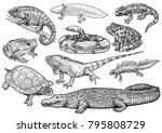 amphibians and reptile... | Shutterstock .eps vector #795808729