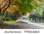 the park in autumn   | Shutterstock . vector #795816865