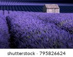 valensole  provence  france.... | Shutterstock . vector #795826624