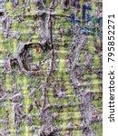 silk floss tree  ceiba speciosa ... | Shutterstock . vector #795852271