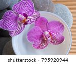 pink orchid in bowl and stones... | Shutterstock . vector #795920944