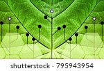 biomimicry   nature and... | Shutterstock . vector #795943954