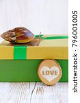 Small photo of the snail Achatina in gift box on light background. the concept of the holiday, congratulations. soft focus.