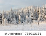 Fabulous Winter Landscape With...