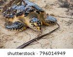 turtle at san blas island in... | Shutterstock . vector #796014949