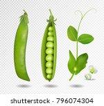 green peas. vector illustration.... | Shutterstock .eps vector #796074304