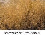 close up yellow desert grass... | Shutterstock . vector #796090501