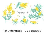 set of beautiful yellow mimosa... | Shutterstock .eps vector #796100089