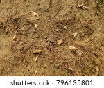 ground with grass and leaf in... | Shutterstock . vector #796135801